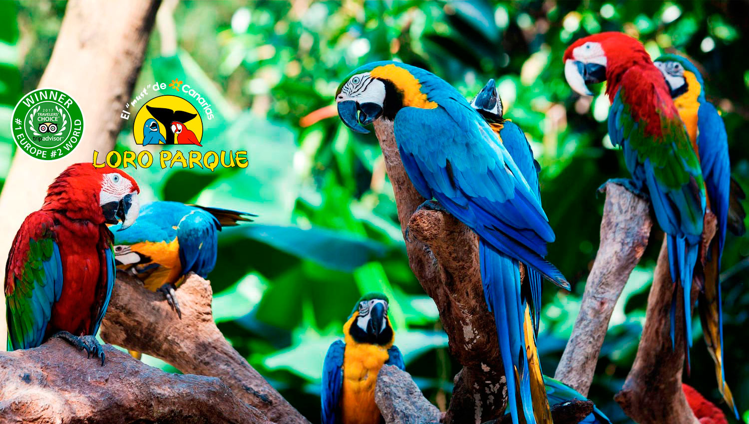 Loro Parque The World S Number 1 Zoo Things To Do In
