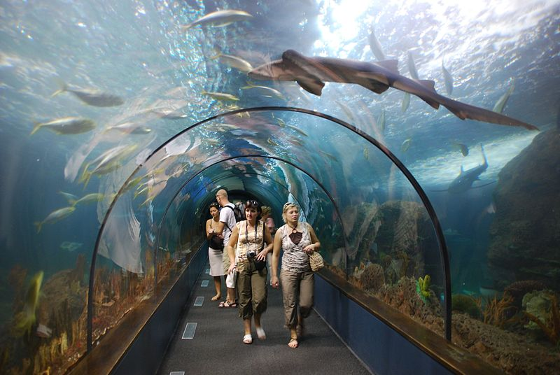 loro-parque-shark-tunnel